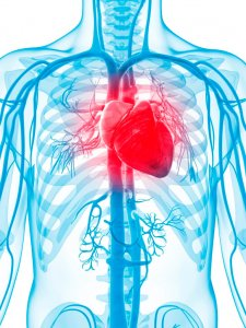 corso cardio RM