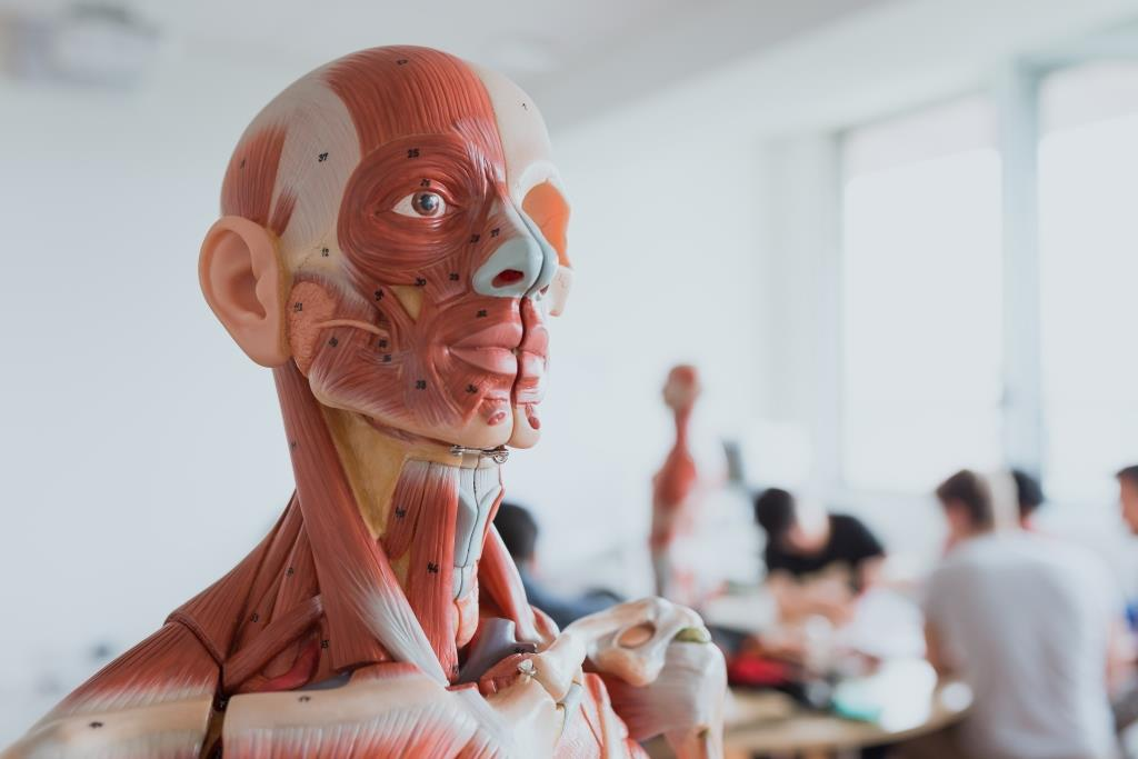 A Guided Tour Through Human Anatomy Hunimed Students At The Real
