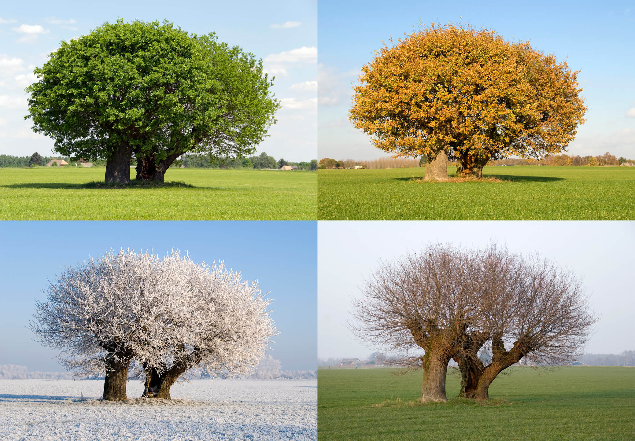 How Seasonal Changes Can Affect Your Body's Metabolism